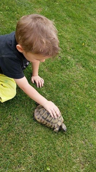 eine unserer Schildkröten
