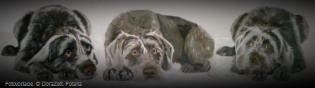 Hundeportrait, Hundeporträt, Malen, Gemälde, Kunst