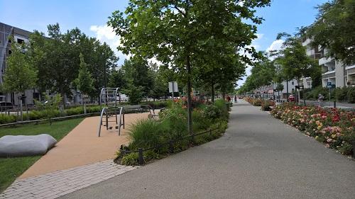 住人の暮らしの質を上げるため、団地再生ではまず緑地の再生から手を付けます