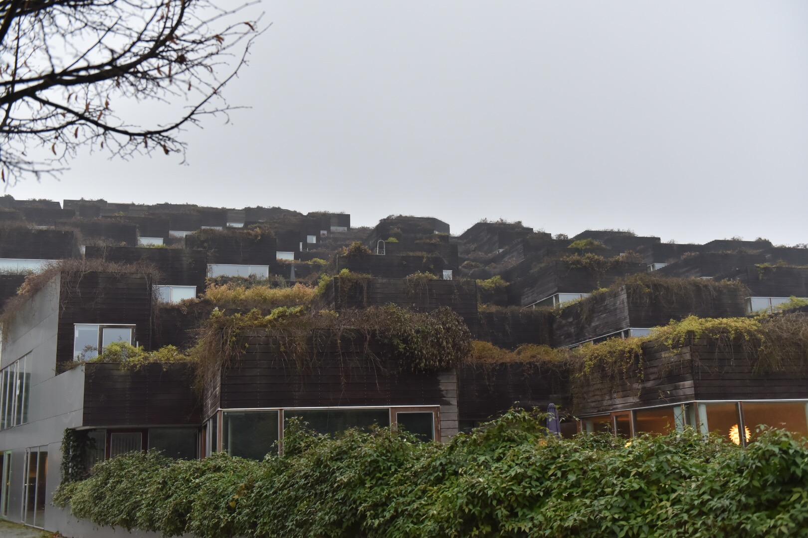 コペンには森と化している住宅地もあります