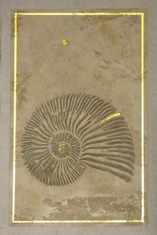 Imitiertes Steinfossil mit Goldrand
