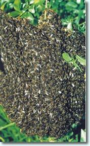 Insektenschutz Bienen