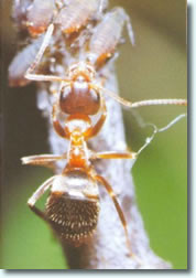 Insektenschutz Ameisen