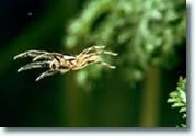 Insektenschutz Spinnen