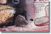 Lichtschachtabdeckung gegen Mäuse