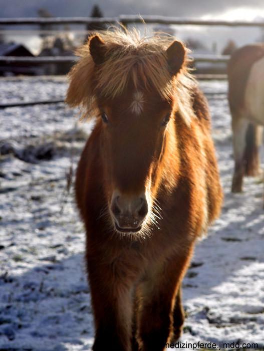 Es schneit! Es schneit! Die Pferde sehen wie verzaubert aus.