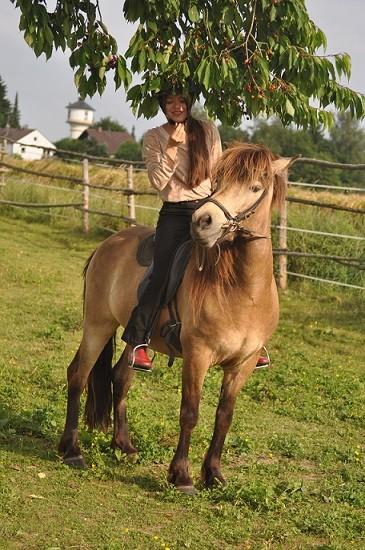Der Baum ist voller reifer Kirschen und die Kirschernte steht an. Wie kann es mehr Spaß machen als vom Rücken der Pferde? Alles war Teamwork. Die Pferde dienten als Leiter und so konnten wir vom Rücken des Pferdes aus, den Pferden die Kirschen entkernen.