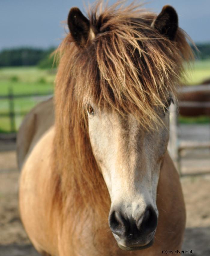 """Unserer besondere Dank geht nach dem Workshop """"Krafttier Pferd"""" an Ljósi, der einem Teilnehmer mit seiner respektvollen Art die Angst vor Pferden nahm..."""