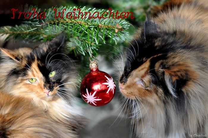 Schöne Weihnachten und einen guten Rutsch ins neue Jahr.