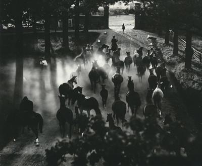 Hein Gorny (1904-1967)  - Heimkehr der Herde  Ca 1936 - Gelatin silver print - © Hein Gorny/Collection Regard