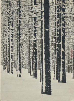 Hein Gorny (1904-1967)  - Untitled (Bäume) 1930s - Gelatin silver print - 24,9 x 18,5 (18,7) cm - © Hein Gorny/Collection Regard
