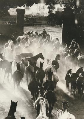Hein Gorny (1904-1967)  - Heimkehr der Herde 1936 - Gelatin silver print re-printed 1972 by Heinrich Riebesehl - 23,1 x 17,0 (23,8 x 17,8) cm - © Hein Gorny/Collection Regard