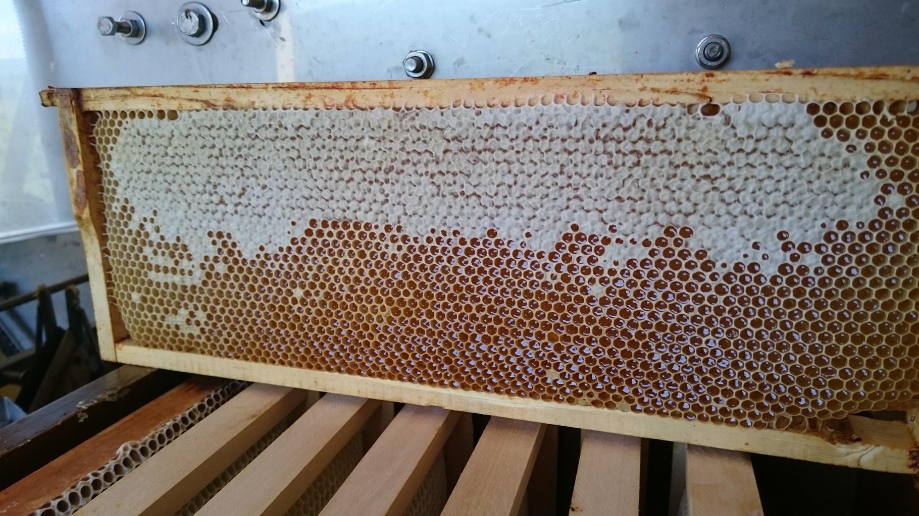 certaines alvéoles sont operculées - les abeilles ont fini leur travail