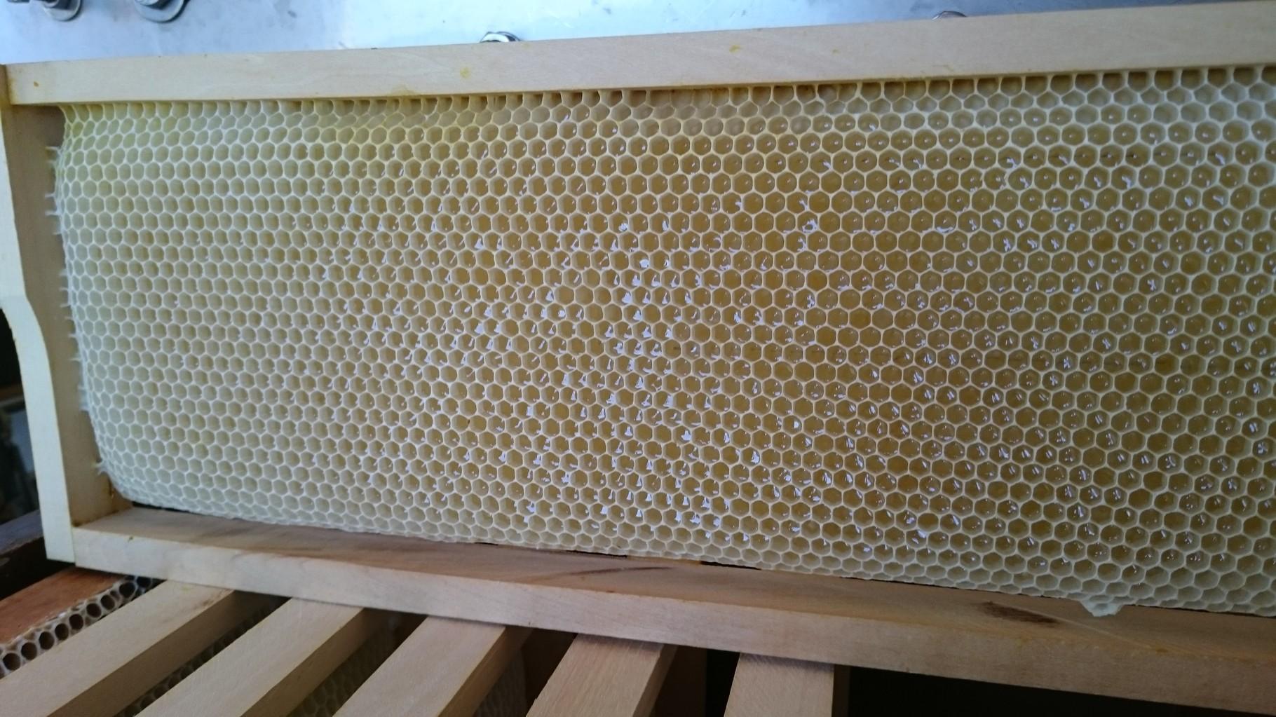 cadre dont les alvéoles ont été remplies de miel