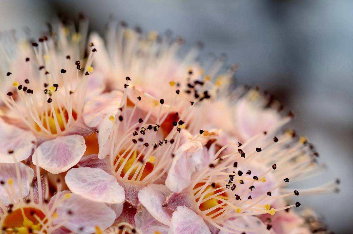 Blumen 010