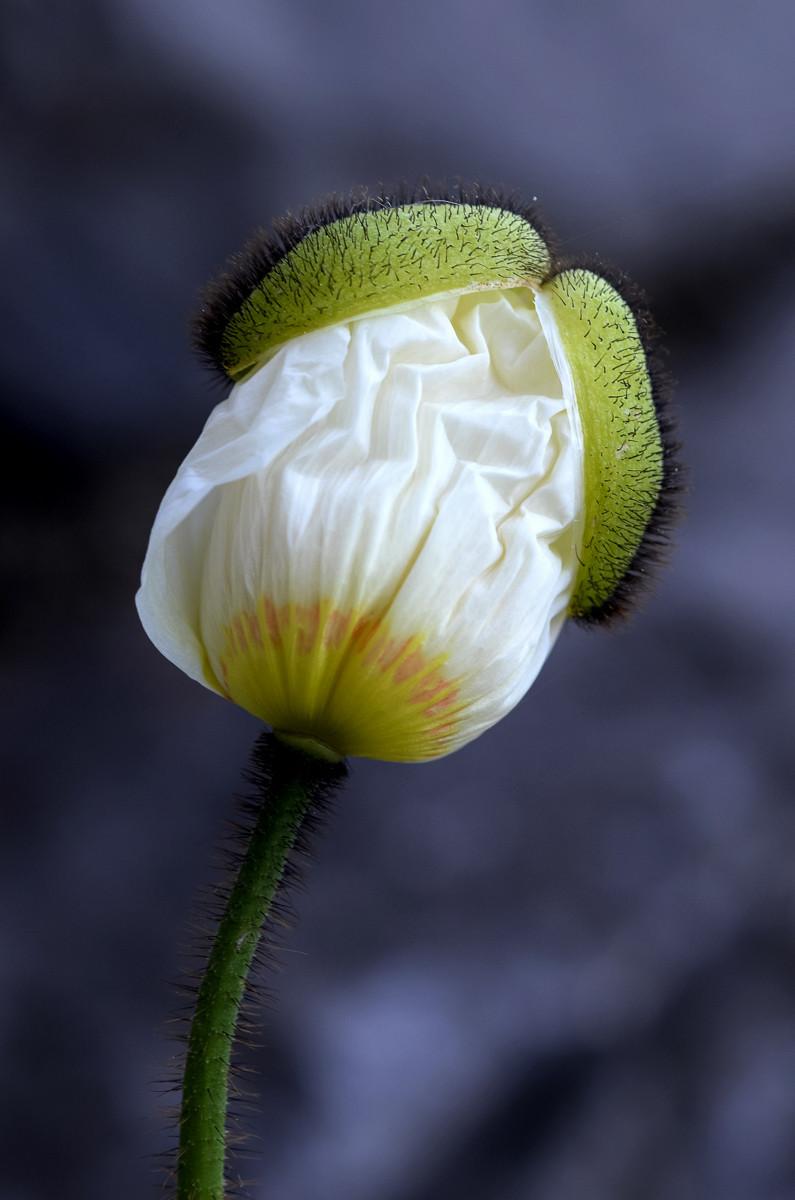 Blumen 008