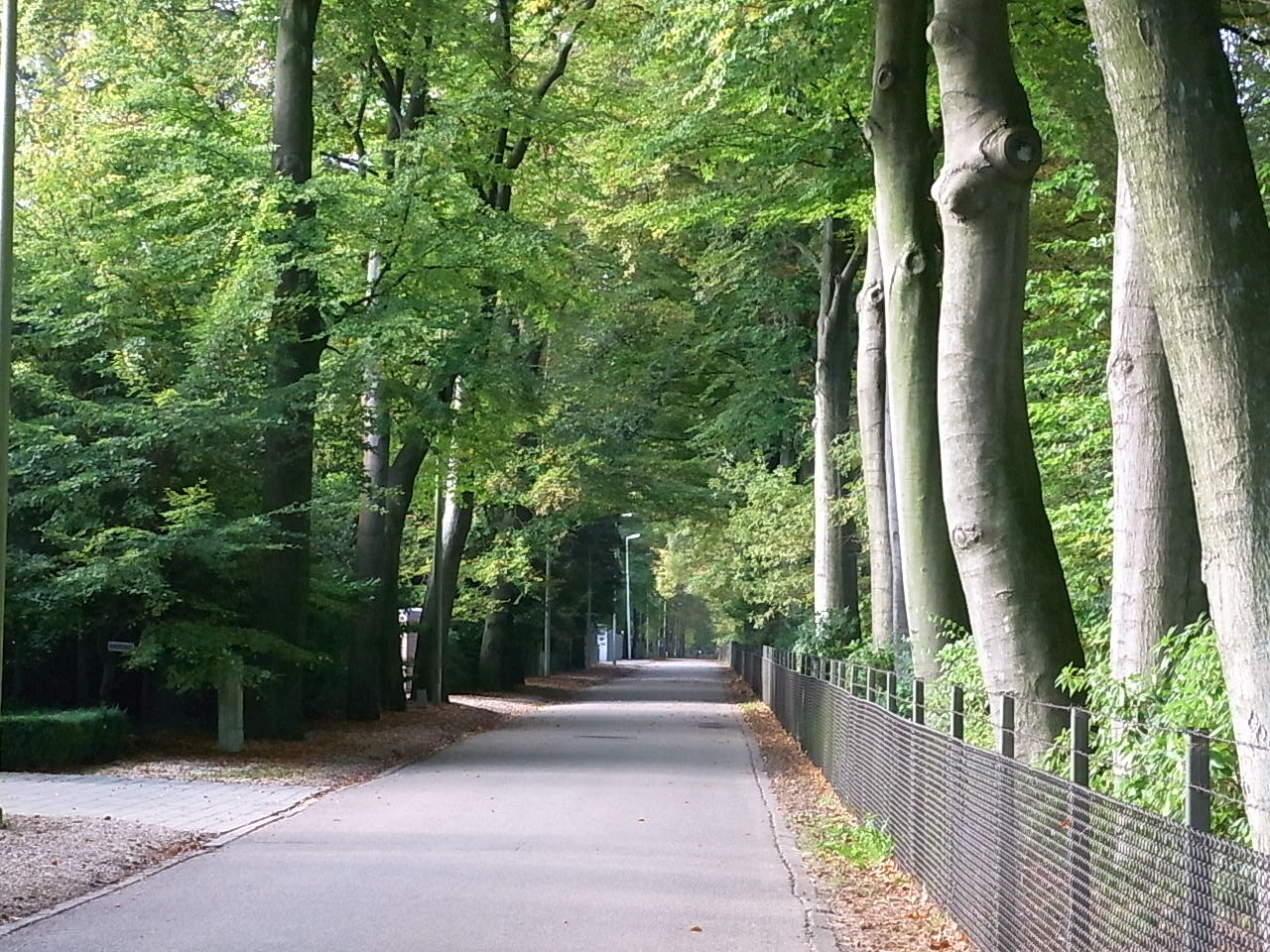 An einem Villenviertel mit viel Wald