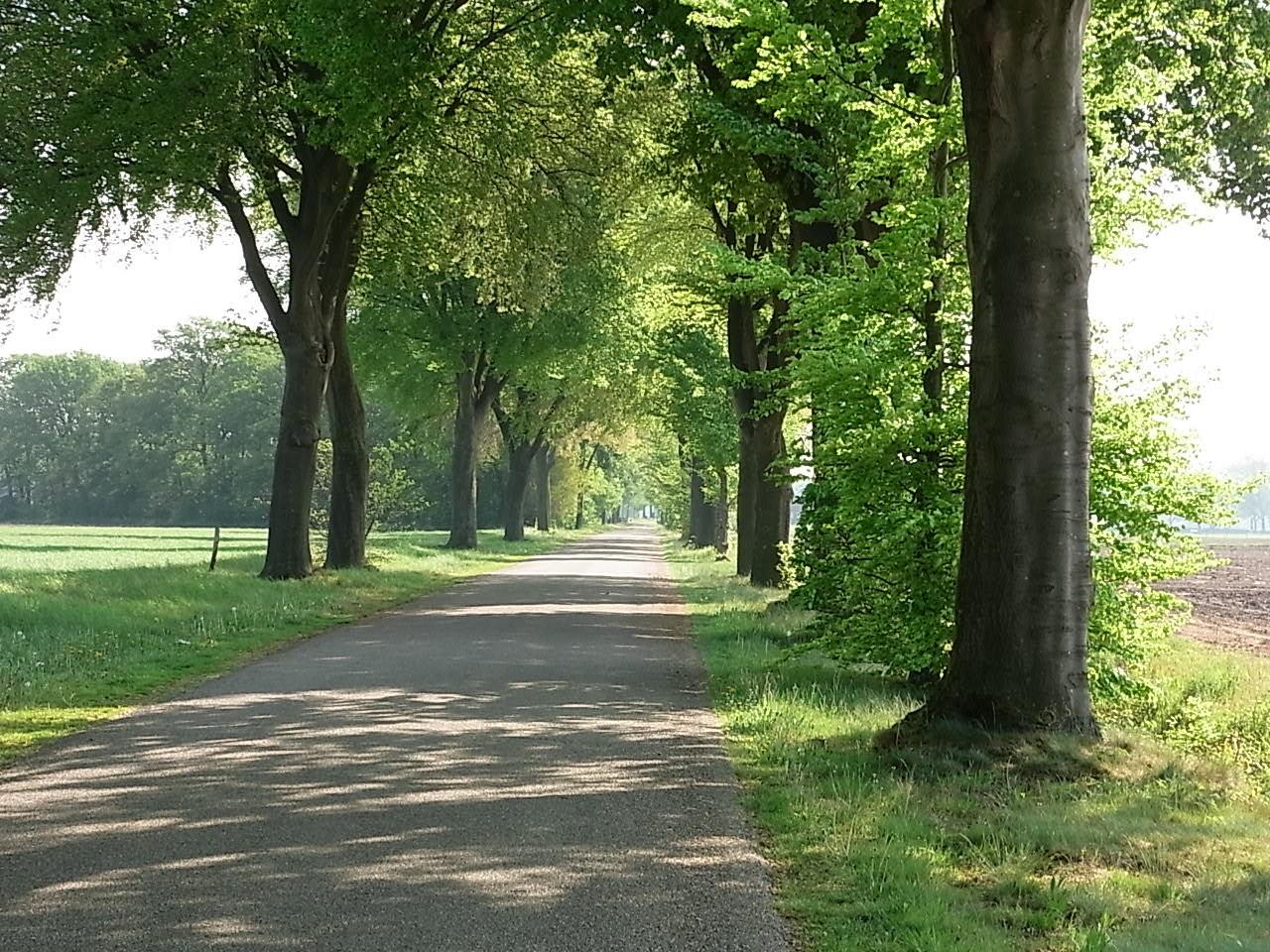 Typische Alleen in der Region (Limburg)