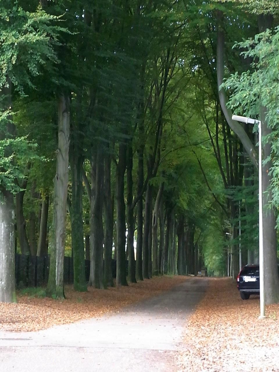 Waldbereich, in dem man aber nicht hindurchfahren kann