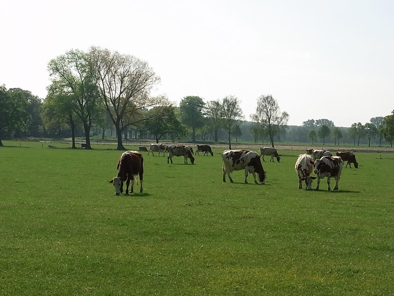 Großer Bauernhof mit Land vor der Abtei Lilbosch