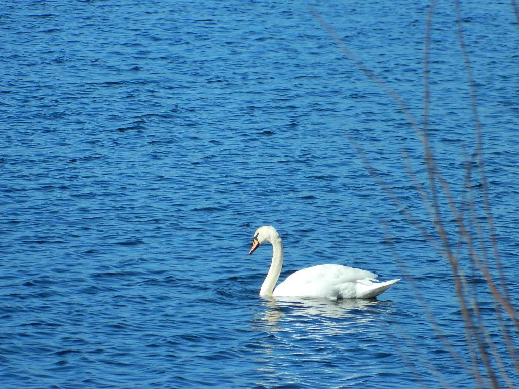 Kleiner See am Wessem-Nederweert Kanal
