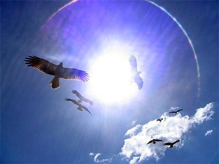 oiseaux ciel