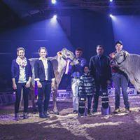 Das Champion Rind BV und das OB Champion Rind