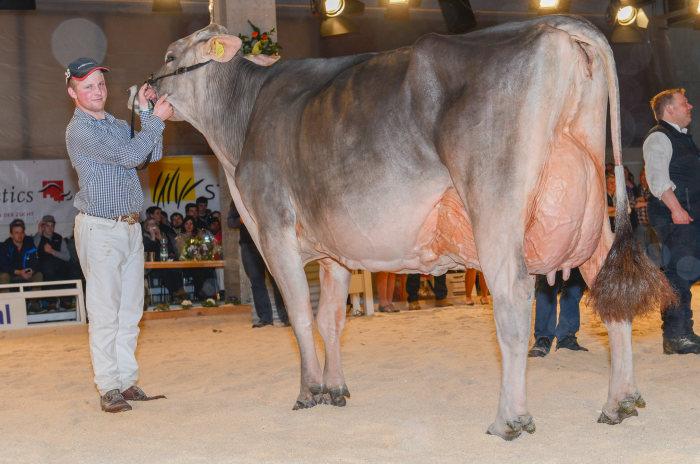 Champion Kuh, Manser`s Joe HANNA von Bruno Manser