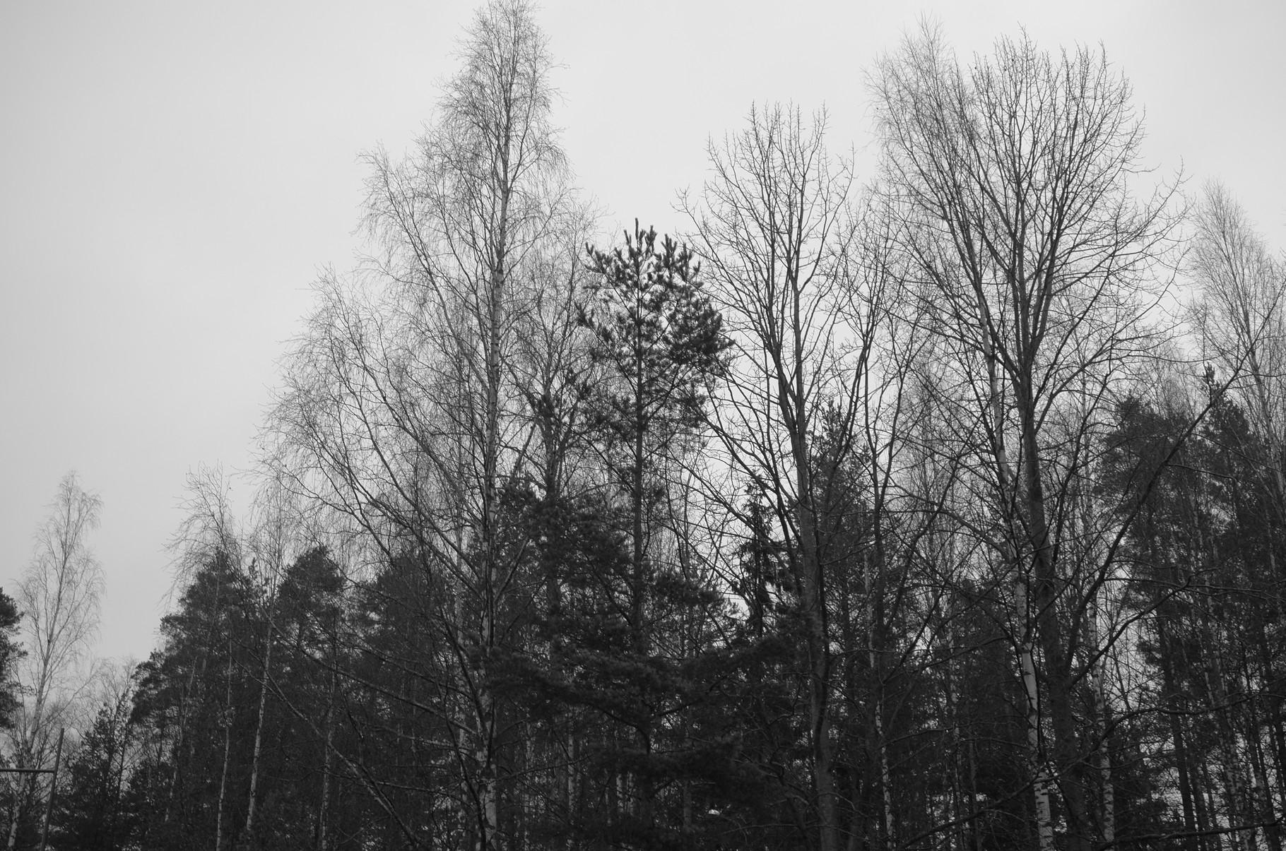 Turku, Finland., Elmar 50mm