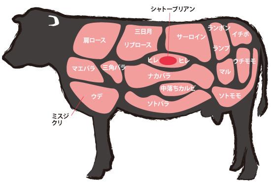 牛肉の部位図解
