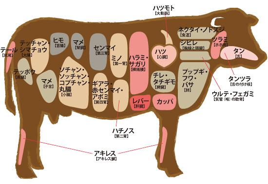 内蔵部位図解(ホルモン)