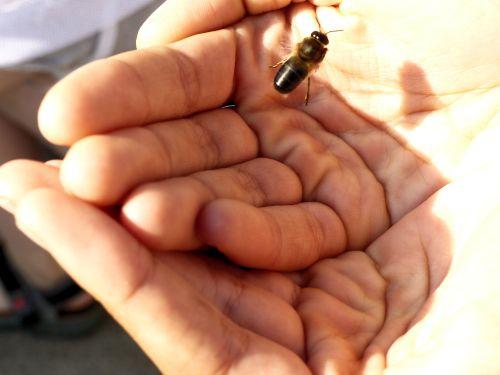 keine Angst, Bienen sind friedlich