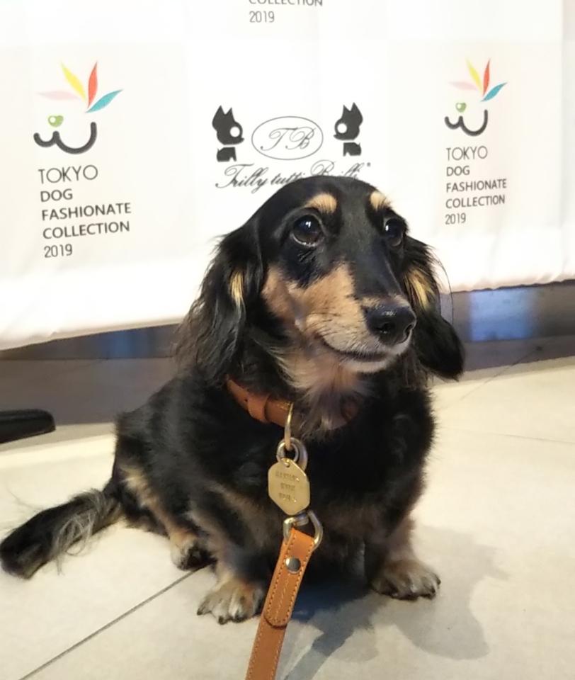 TOKYO DOG FASHIONATE COLLECTIONエントランス