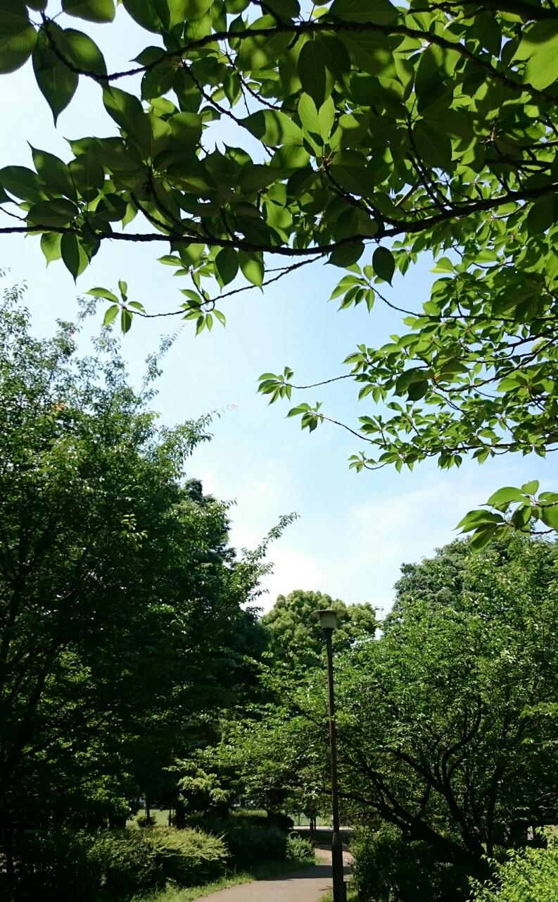 近所の公園も青々としています