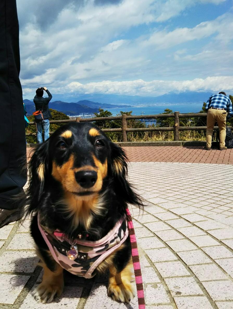 ちょうどくおんの頭の上くらいに富士山