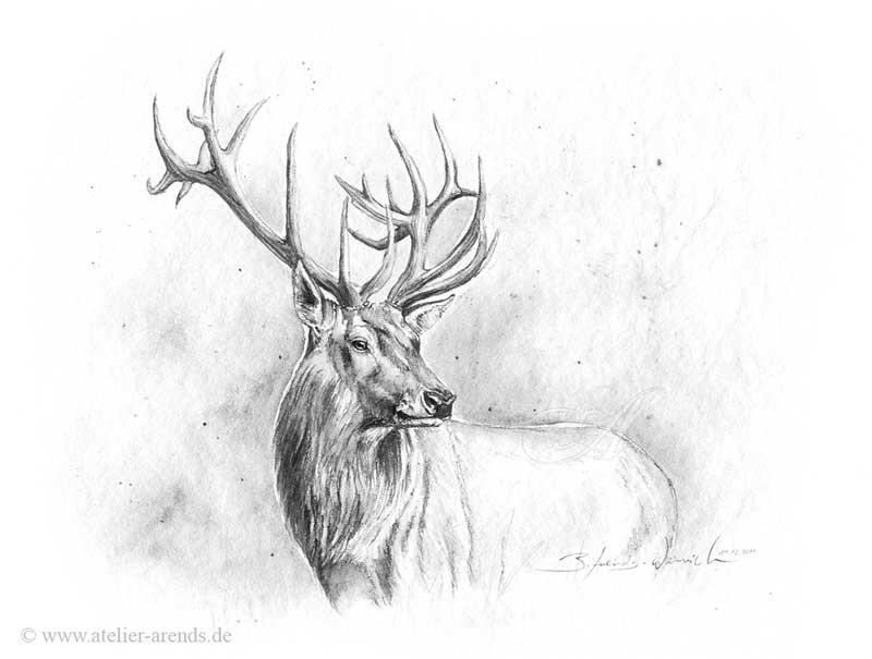 Kleine Skizze eines Hirsches, Graphit/Aquarell 24 x 30 cm.