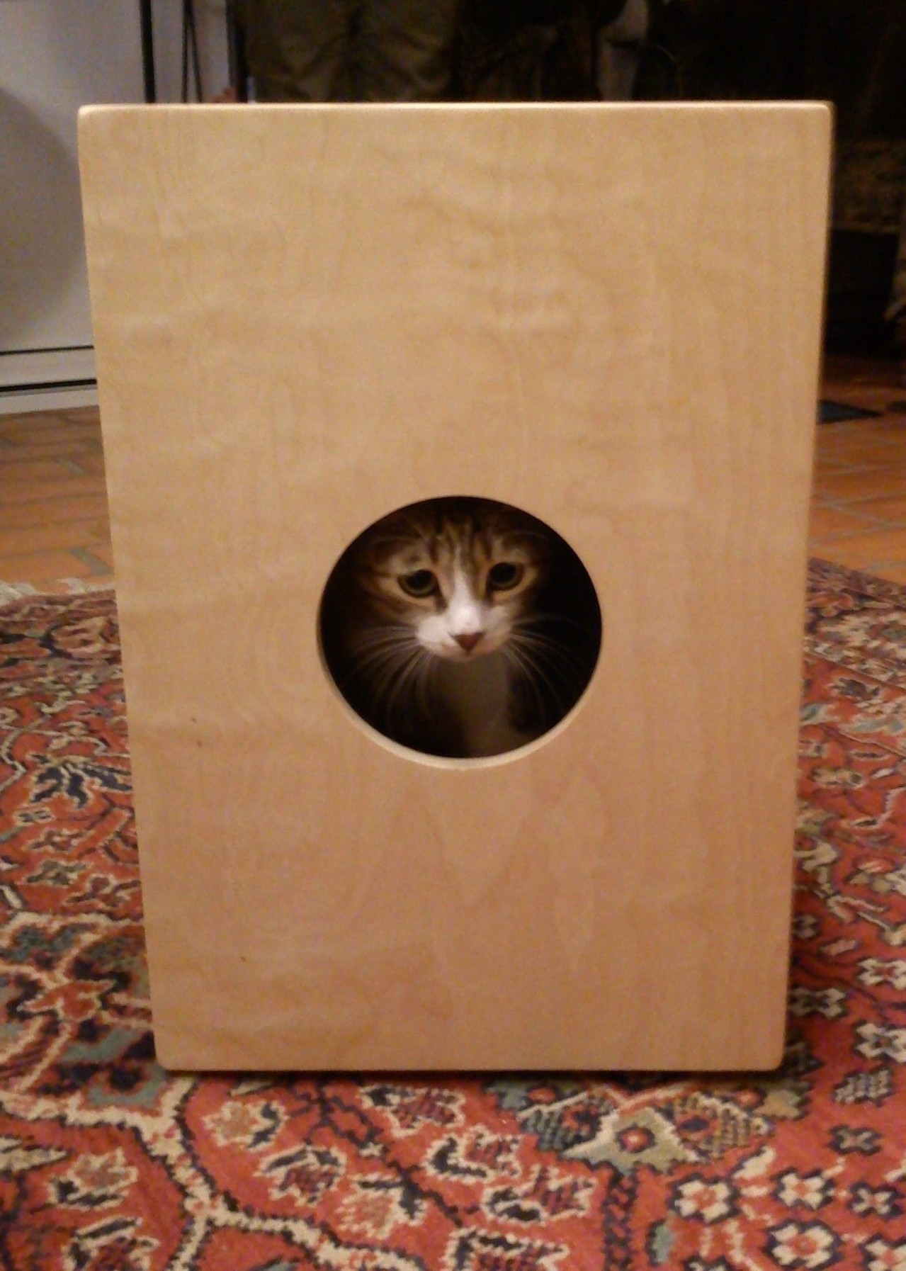 Cindy in the Cajonbox