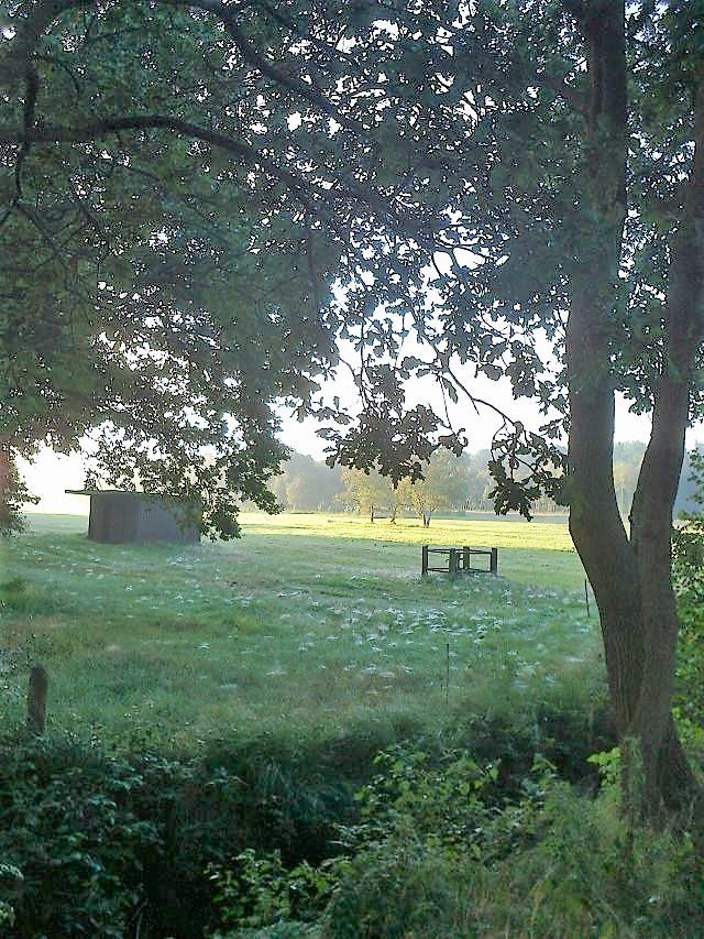 Spinnweben mit Morgentau in Wiesengras