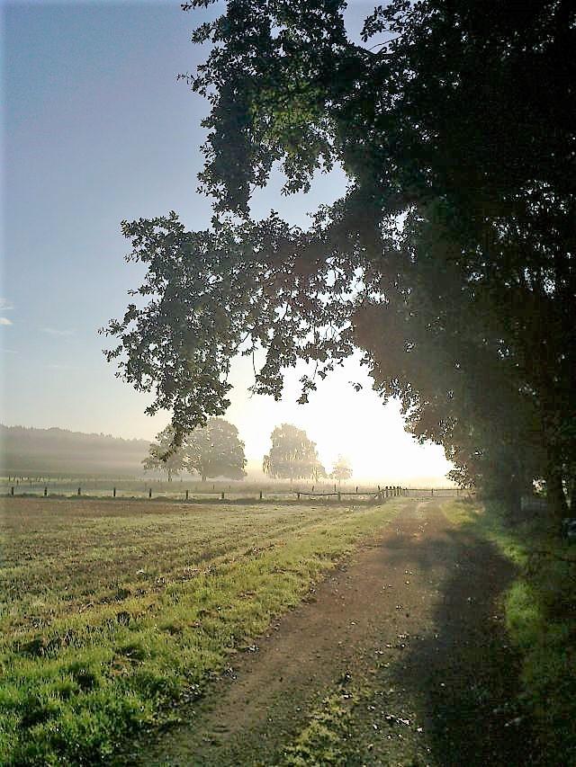 Morgennebel in Feld und Flur