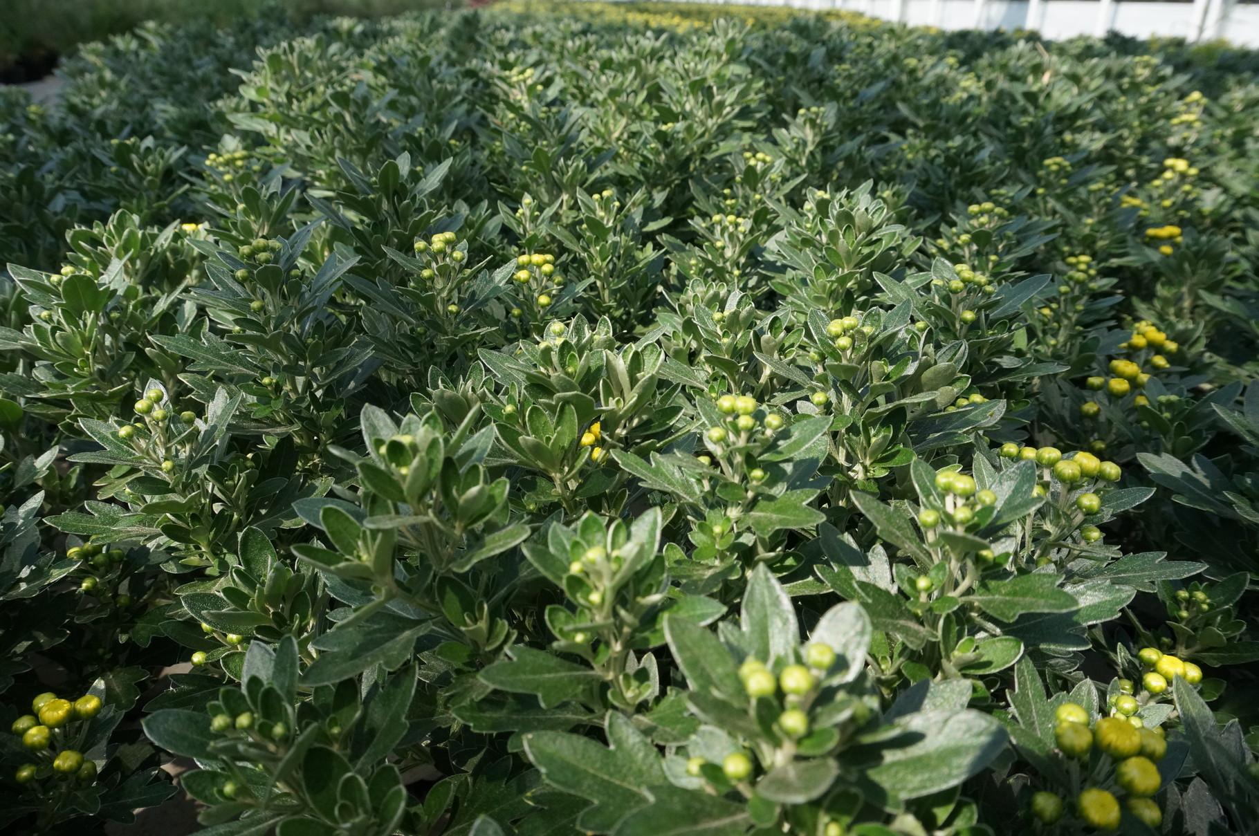 Pflanzen f r friedhof sommerblumen und strukturpflanzen f for Pflanzen drinnen