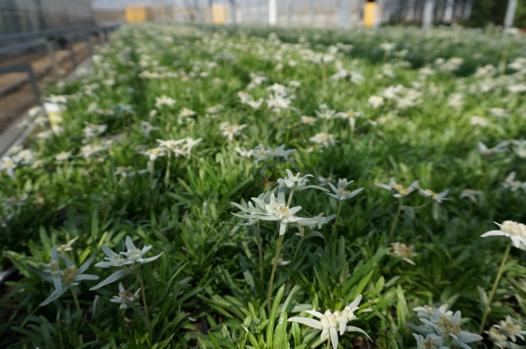 blumen und pflanzen für drinnen und draußen - gärtnerei klein blumen