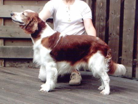 Inma's Nêr Nigel, M, 7-3-97