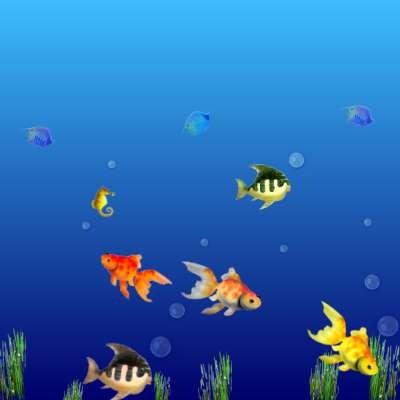 unten im Meer .... ist auch was los