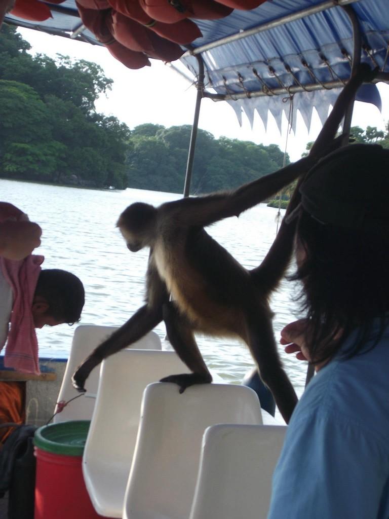 "Curious ""Luci"" from the Monkey Island (Isletas de Granada)"
