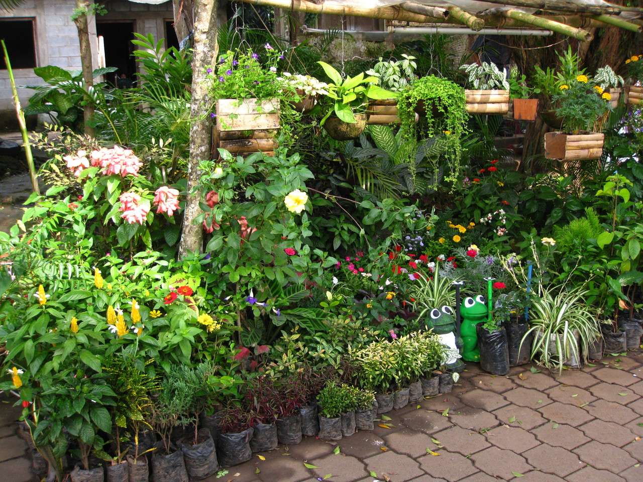 Flowers and plants shop in Catarina