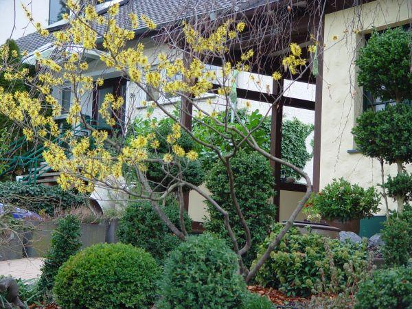 Winterblüher an Standorten pflanzen, wo man sie im Winter auch sieht!