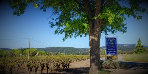 Lou Camp d'Andriou 83570 COTIGNAC