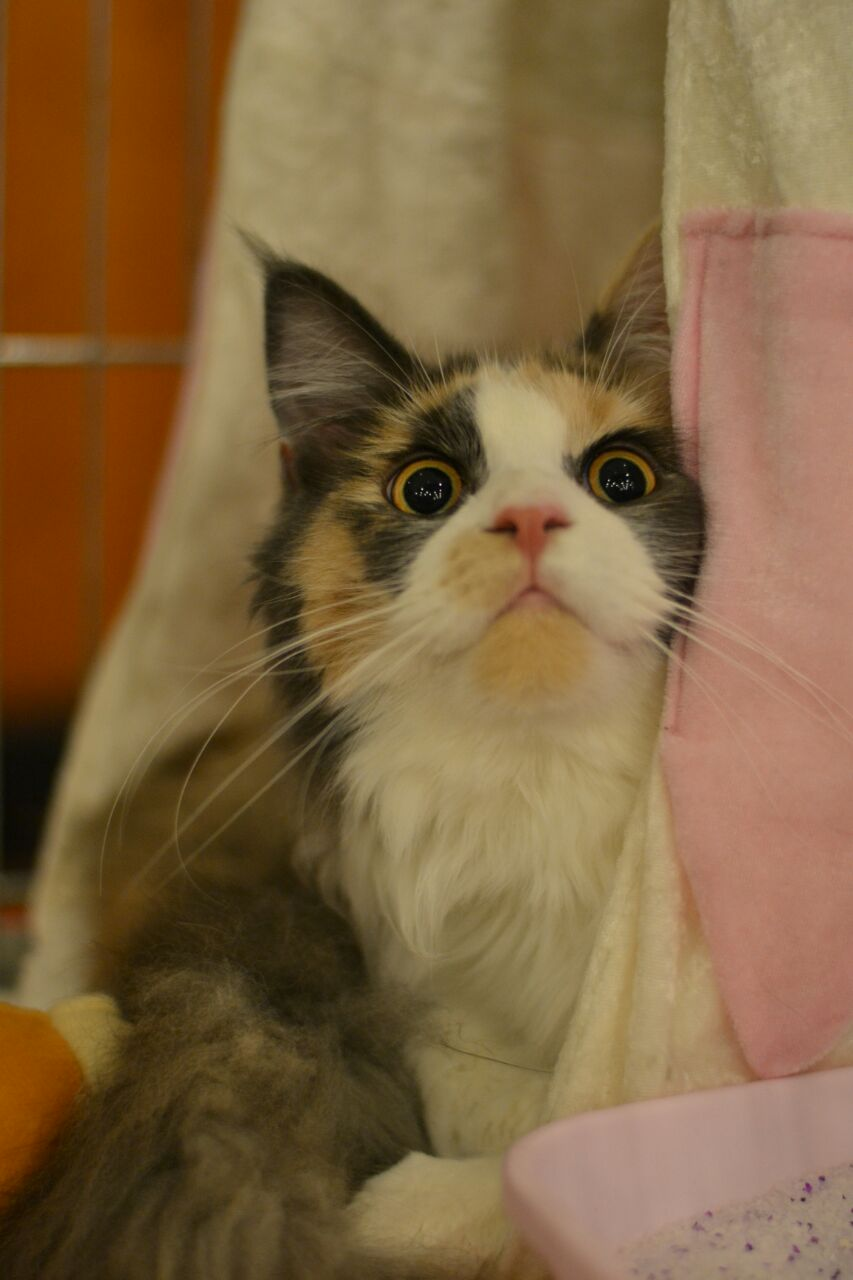 Internationale Katzenausstellung Wulften
