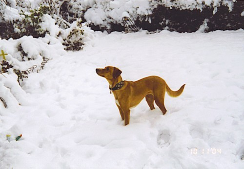 Der 1. Schnee - da schaut sie aber!