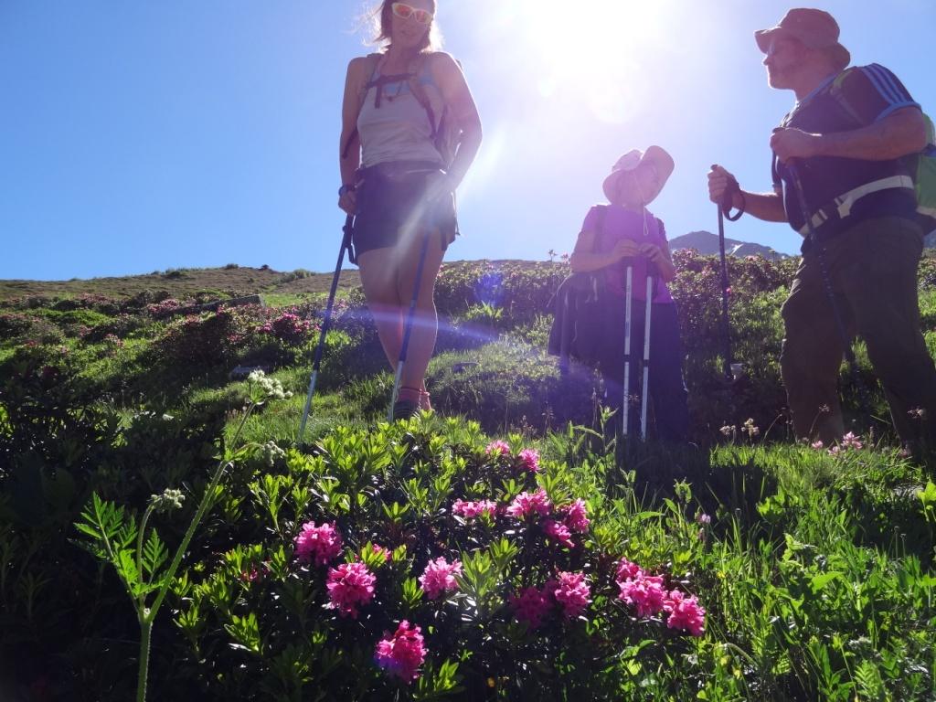 Rhododendron : une plante invasive